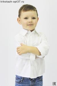 Рубашка школьная белая/голубая, без кармана